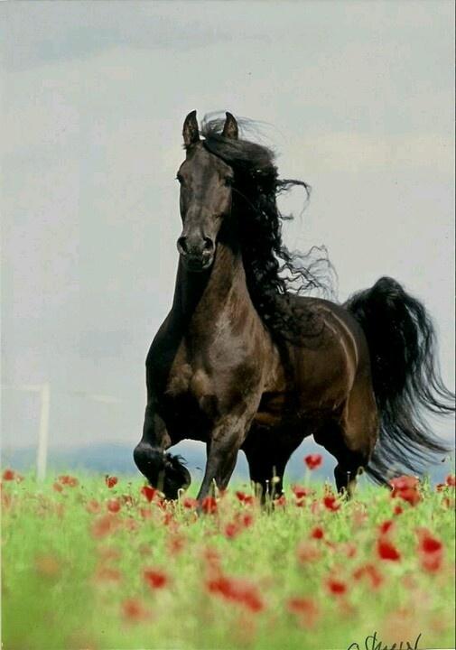 Whatta horse!