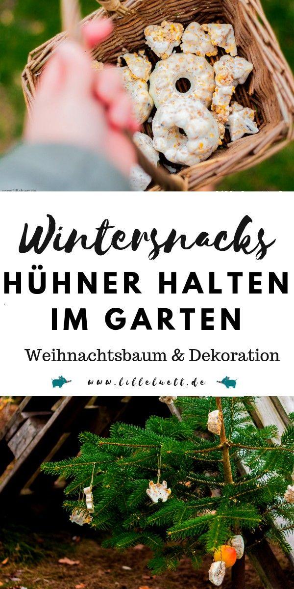 Huhnerleckerlis Huhnerweihnacht Huhnerimgarten Huhnerimwinter Backyardchicks Diyfurhuhn Chickens In The Winter Winter Vegetables Gardening Chicken Garden