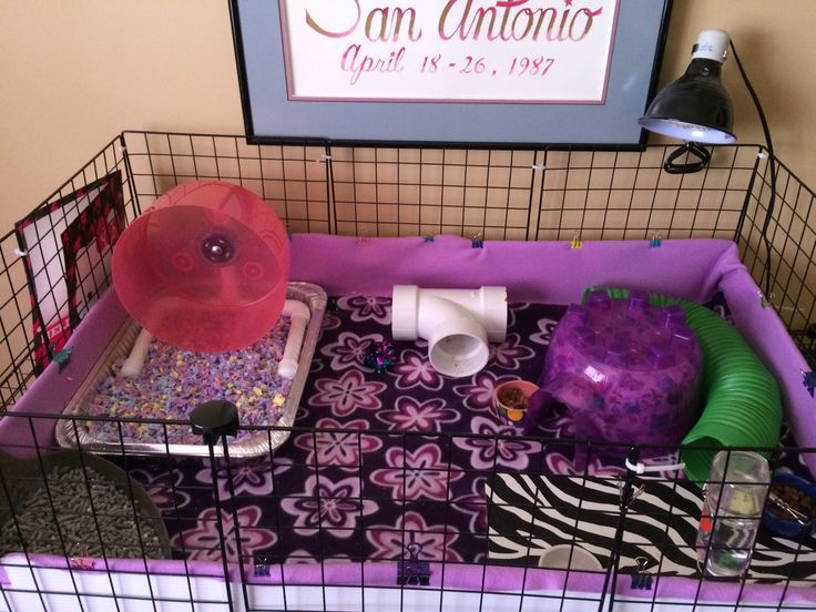 A C&C cage for a hedgehog.  Contains: Fleece liner, Large igloo, Carolina Storm Bucket Wheel, PVC pipe (tunnel), Water bottle and bowl (I have a place mat under mine), Food bowl, Litter pan, Heating lamp with ceramic bulb