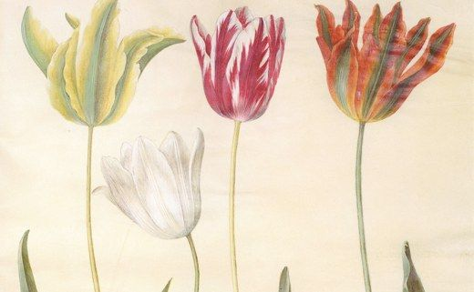 The Greater Fool Theory in Action: Tulip Mania in The Netherlands Manias are a basic part of human nature!