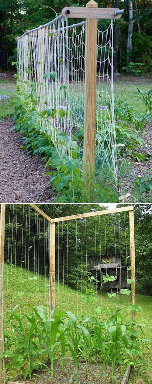 19 Successful Ways to Building DIY Trellis for Veggies and Fruits