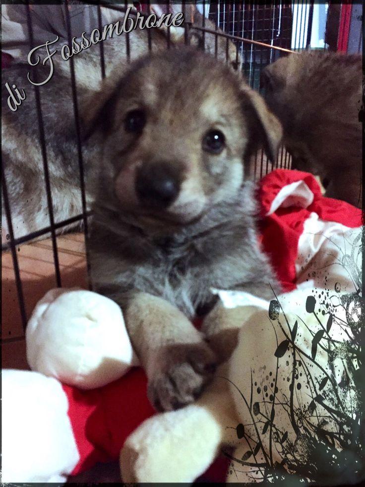 Anche se il futuro sembra lontano, in realtà comincia proprio adesso. (cit. M.Stepanek) #WeAreFossombrone #Cuccioli