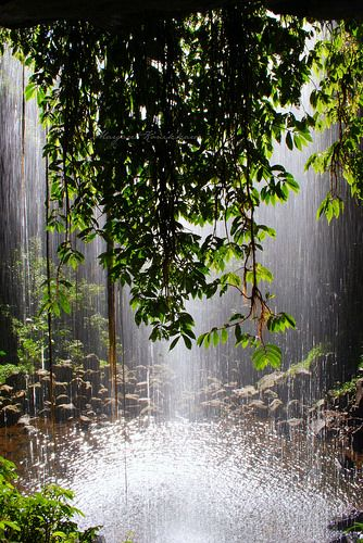 Crystal Shower Falls in Dorrigo National Park near Coffs Harbour NSW Australia