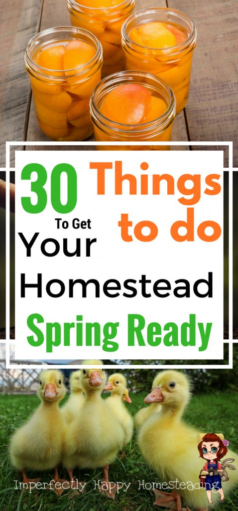 Get your backyard homestead spring ready with these 30 tips and ideas. From the garden to livestock to your pantry - your homestead will be spring ready!