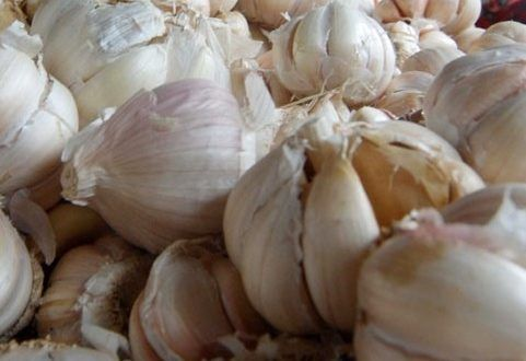 Garlic Benefits for you and Family healthy