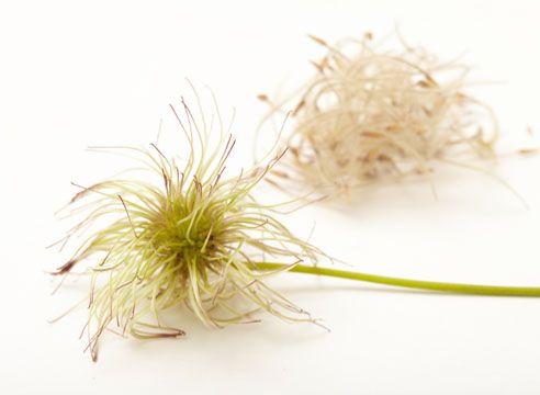 стратификация семян в домашних условиях - лучшие способы