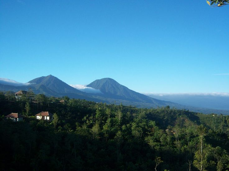 Munduk Hotel - North Bali, coffee plantation