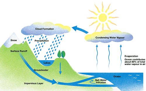 15 best the water cycle images on pinterest water cycle teaching the homeschool voyager the water cycle facts poetry songs and stories ccuart Choice Image