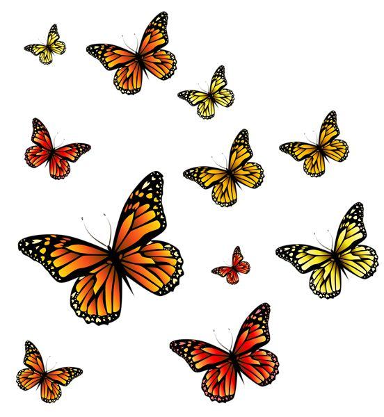 Butterflies PNG Image
