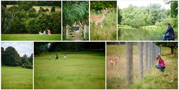 Weald Country Park collage