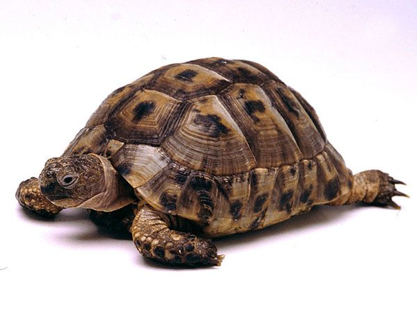 Common Tortoise-Endangered animals list-Our endangered animals | KONICA MINOLTA