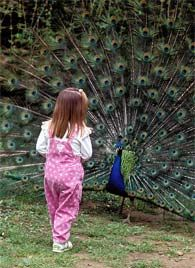 A close up experience with birds can be very educational for kids!