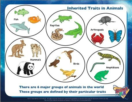 Inherited Traits in Animals. #Science #Printables ...