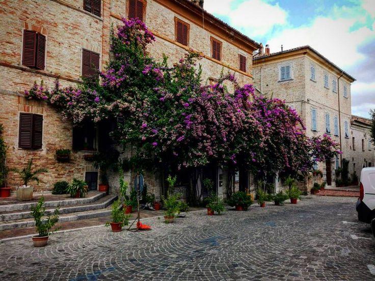 Natura libera #nature #city #urban #natura #flowers #flower #corinaldo #marche #italia #italy #ig_nature #ig_urban #ig_italy #ig_italia #igers #igersitalia #igersitaly #igersbergamo #ig_marche #whatitalyis #borghitalia #holiday #travelling #travel #viaggi