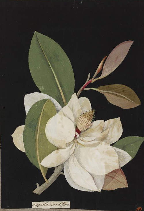 Paper 'mosaik' by Mary Delaney, circa the late 1700s.