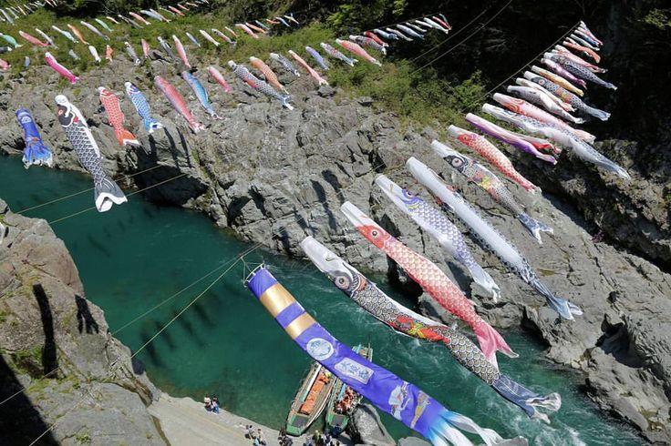 Shinya Ueda/Globe Trotter/🇯🇵  @uedashi  Carp streamers over the Valley, Oboke, Tokushima, Japan  5月なので鯉のぼりを。徳島県三好市の大歩危峡の風物詩になりました。…」