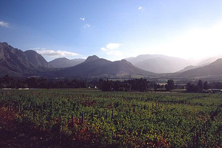 Vineyards, Franschoek, Western Cape, South Africa