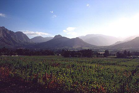 Vineyards, Franschoek, Western Cape, South Africa