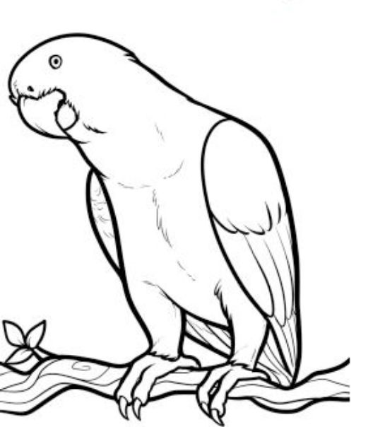 Steps to Draw a Parrot | how-to-draw-a-parrot (3)