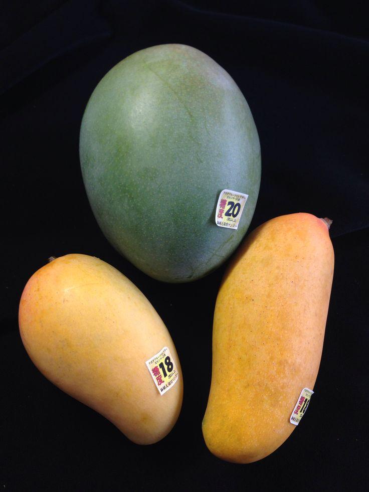 マンゴー3種類