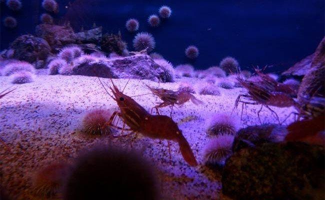 Krill olie, waarom is het een goed anti-veroudering supplement?