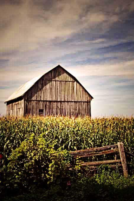 The Corn Field Barn