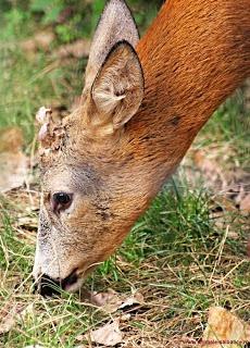 Wild Animals #GolfRoseAnimalHospital