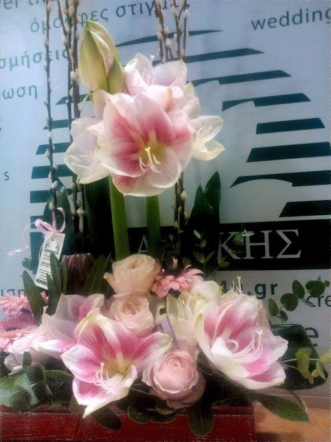 pink amaryllis for table decoration  by Flowers Papadakis  info@flowers4u.gr  tel 00302109426971