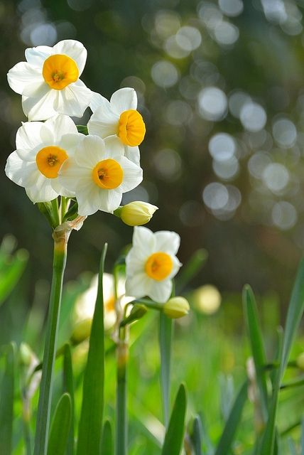 Spring Is Here by joyce