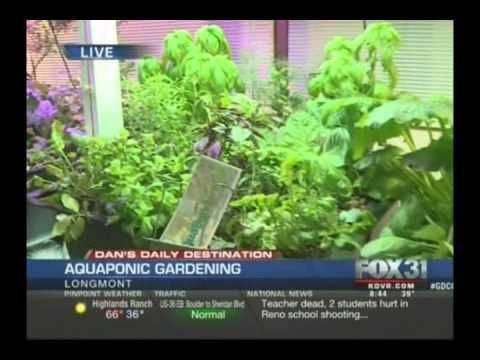 Aquaponics a new way to garden fox news interviews the for The aquaponic source