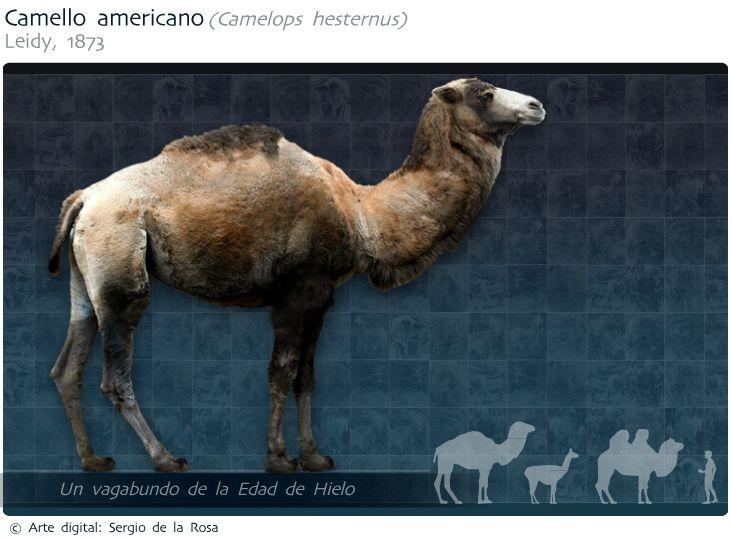 Cash Back Near Me >> Camello americano (Camelops hesternus) | Birds, dogs, horses, camels and elephants. | Pinterest