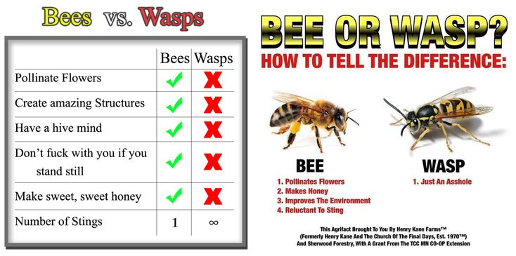 wasps-are-jerks2.png 2,363×1,175 pixels