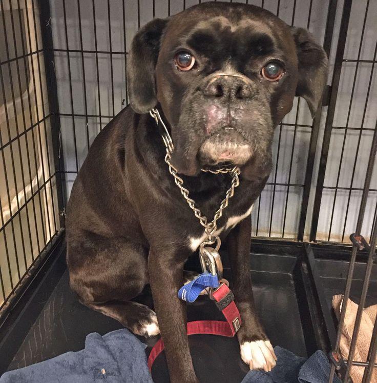 Mejores 37 imgenes de dog grooming in brooklyn ny en pinterest encuentra este pin y muchos ms en dog grooming in brooklyn ny de diamondcollar solutioingenieria Images