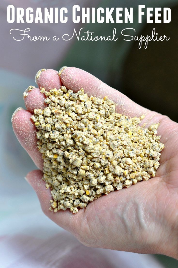 Is sourcing organic chicken feed important to you? It has just become more accessible to your flock with Purina's new line of organic chicken feed. #PurinaOrganicFeed #ad