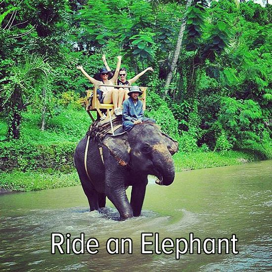 Bucket list: take a walk on the wild side and ride an elephant!