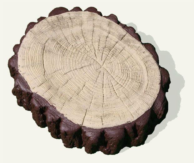 Plaster pnia drzewa fi 24