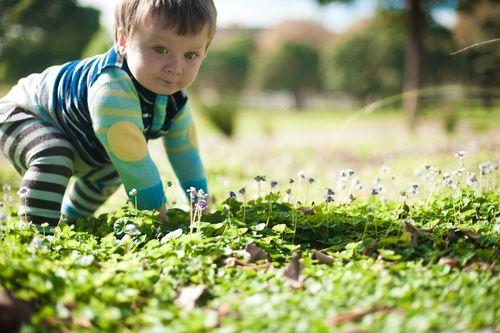 Urban Foraging Australian Native Violets