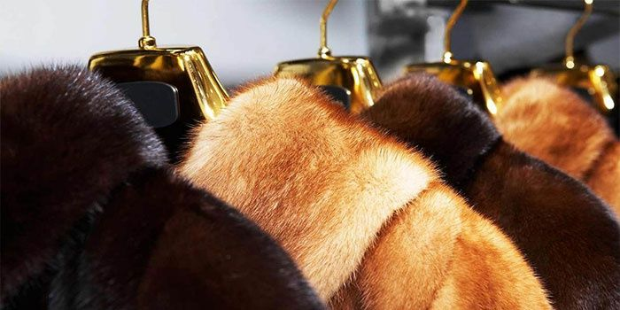 Как покрасить мех в домашних условиях, чтобы обновить любимую норковую шубу или песцовый воротник? О чем нужно знать, чтобы сохранить внешний вид изделия?