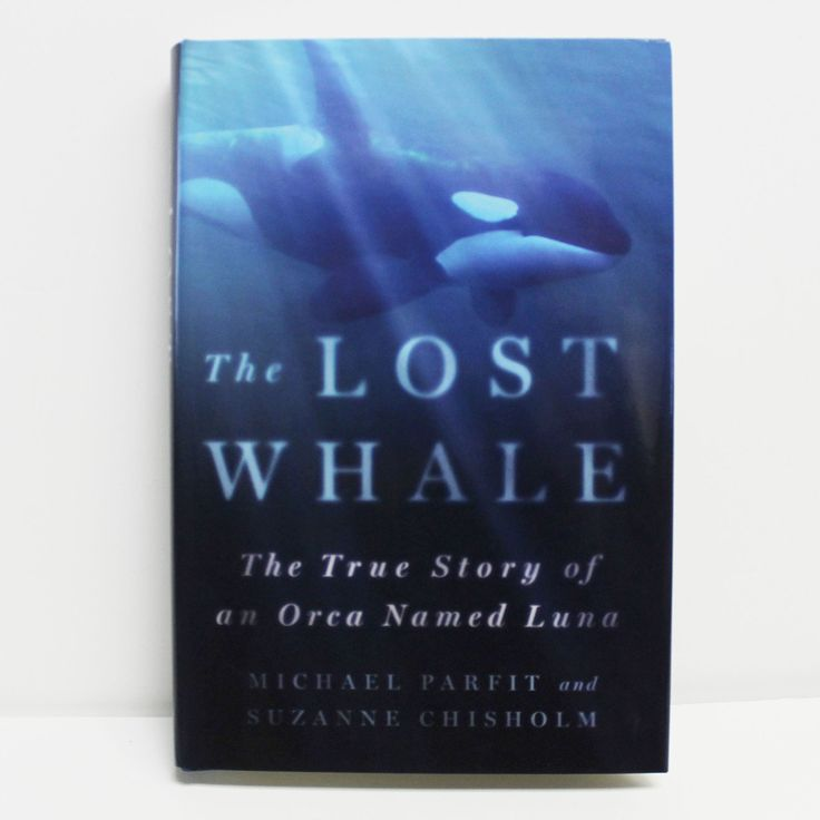 The Lost Whale The True Story of an Orca Named Luna