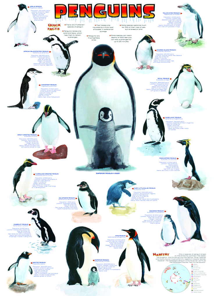 EuroGraphics Penguins 1000-Piece Puzzle. Eighteen species of beautifully illustrated penguins are featured along with a wealth of information.