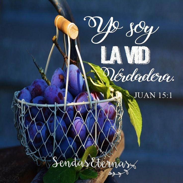 """YO SOY LA VID """"Yo soy la vid verdadera"""" Juan 15:1 https://sendaseternas.blogspot.com.es/2017/02/yo-soy-la-vid.html #Versiculobiblico #Biblia #Dios #Sendaseternas"""
