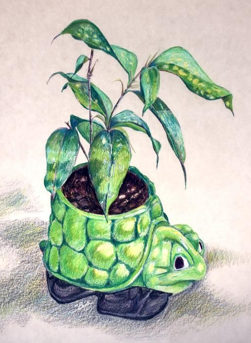 237 best images about colored pencil art on Pinterest