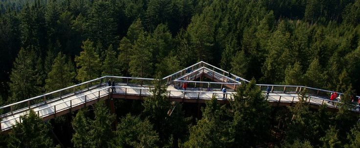 Šumava National Park offers many charming places - for example The Treetop Walkway in Lipno, #Czech Republic