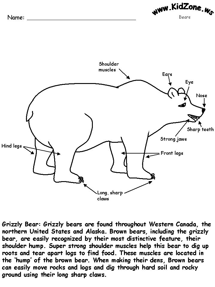 Color the grizzly bear that has been labeled for you ...
