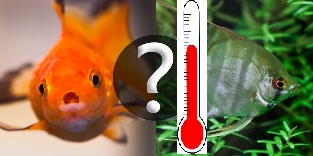 22 best images about on for Fish tank temperature