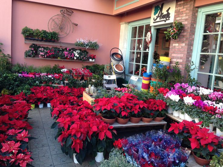 The Christmas version of our flowershop, in Athens.... Enjoy...
