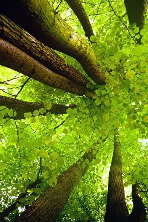 """"""" Los bosques te pedimos. Míranos, huélenos, entre en nosotros y siéntenos, escucha nuestros sonidos, huele nuestros olores, saborea nuestros sabores... descansa tus ojos y tu mente en el profundo verde de nuestros follajes y siénte. Volverás a conectar y recuperaremos la fuerza y alegría de vivir. Cántanos... el sonido nos une y alegra el alma de los árboles, devolviendo a los bosques su memoria sagrada..."""" Yo soy el bosque. Yo soy tú. """""""