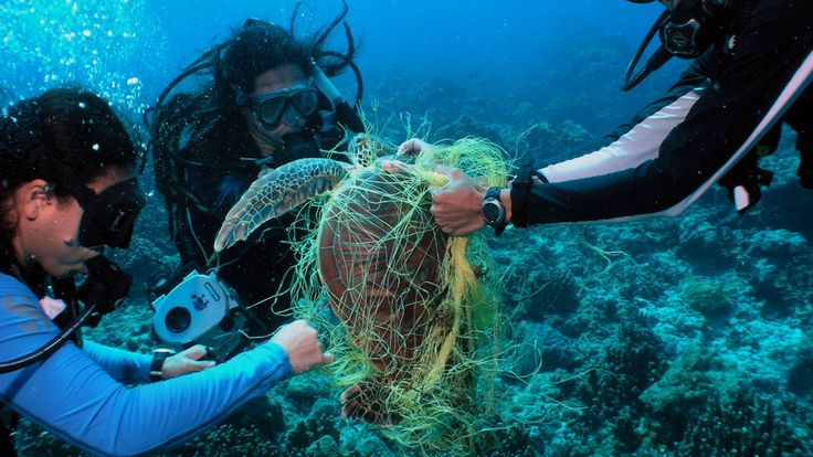 Ghost gear is fishing equipment which has been abandoned or lost and is now causing harm to fisheries and ocean ecosystems. The framework provides the seafood industry - from port operators to seafood companies - with practical steps to decrease the abundance and effects of ghost gear within their respective industries. http://maritime-executive.com/article/ghost-gear-management-guide-released