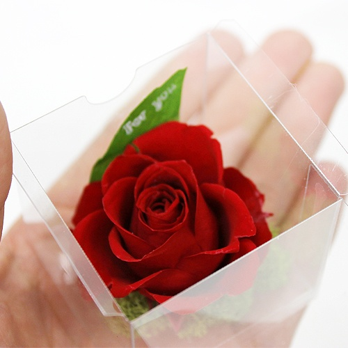 Clear Rose Red http://www.phy-f.com/products/detail.php?product_id=233