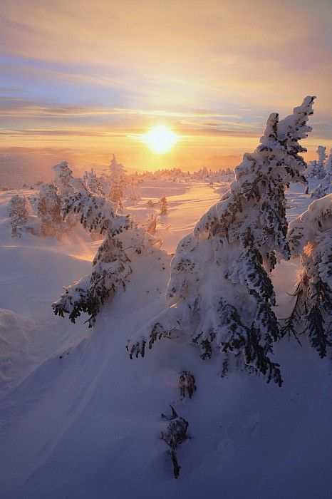 Snow-Covered Trees At Mont Logan At Sunrise, Quebec, Canada